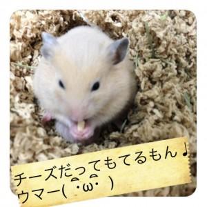 daikichichi-zu