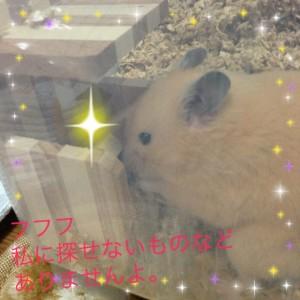 daikichi-mitukeru-chi-zu