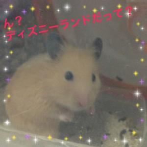 kinkuma daikichi dhizuni-