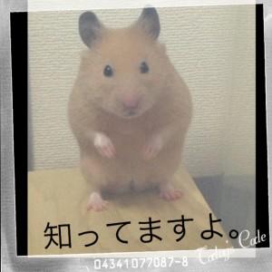 shitterudaikichi