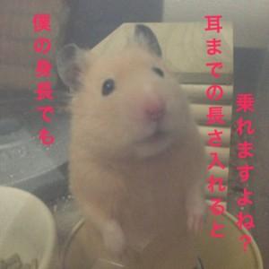 daikichishinchou