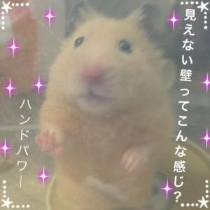 handopawa-daikichi